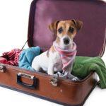 Картина, корзина, картонка и маленькая собачонка: как перевезти животное за границу